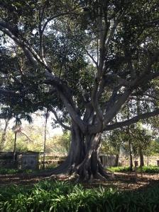 SB Mission tree