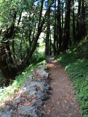 Partington Cove trail